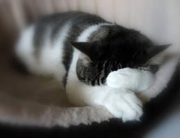 let me sleep by frei76