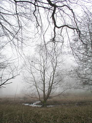 trees on a foggy morning