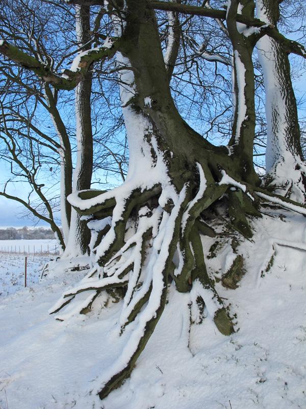 Winter in Holvede by JSaurer