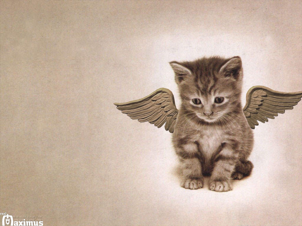 Angel Cat By Real Maximus On Deviantart