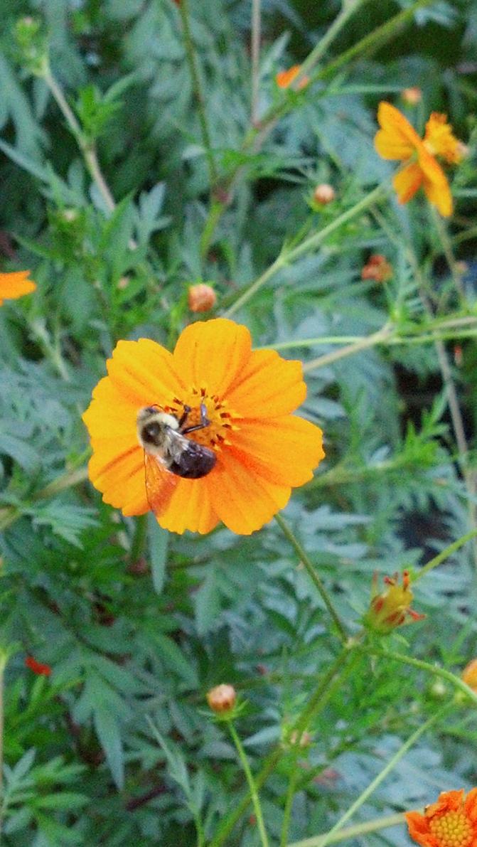 Flower Hopping by wyldflower