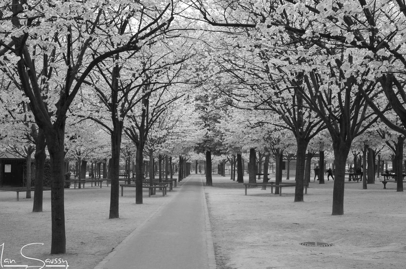 The Park by iamsaussy