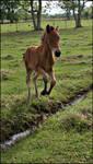 Pixie Foal Stock - 4