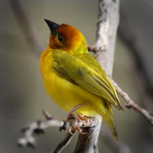 another bird