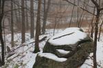 Misty Woods Stock 4