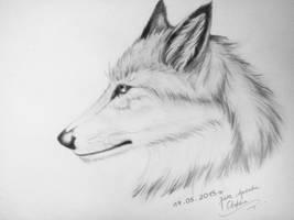 Wolf by ColdDarkWolf