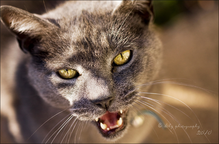 Yawn, Part II by ILTBY