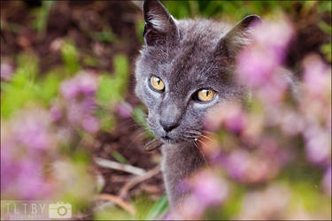 Hiding In The Flowers