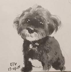 Study of Doggo 20170305