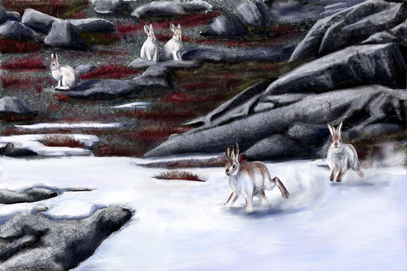 Mountain Hares II by SpecialNightStar