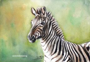 Zebra by the-frozen-bunny