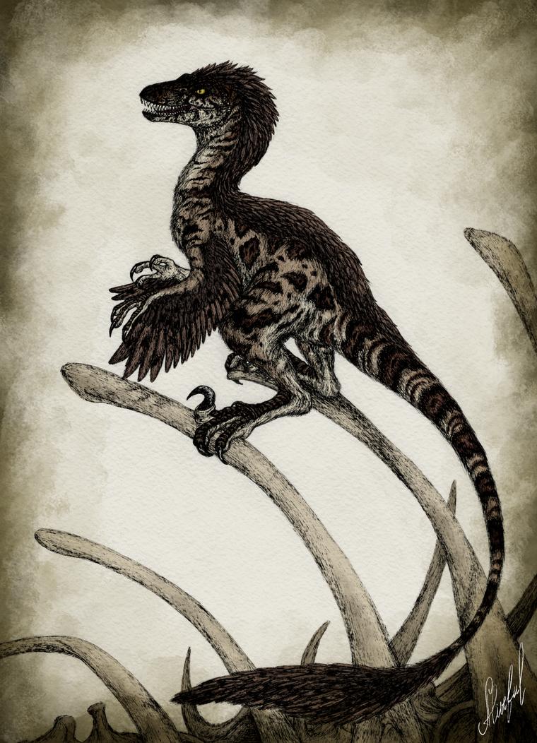 Novaraptor by Aliveful