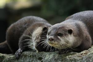 Cuddly otters by DarkTaraArts