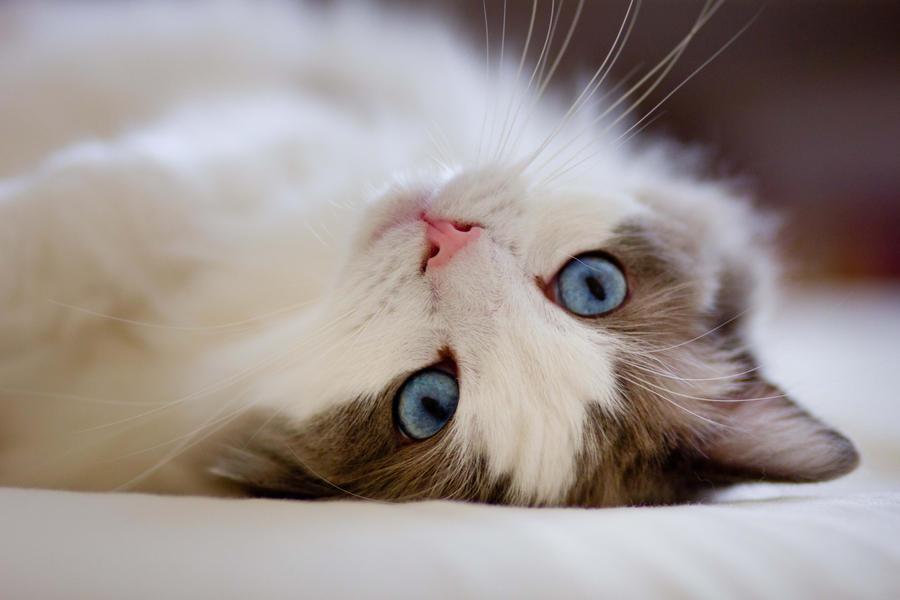 A sweet cat by Almirenaa