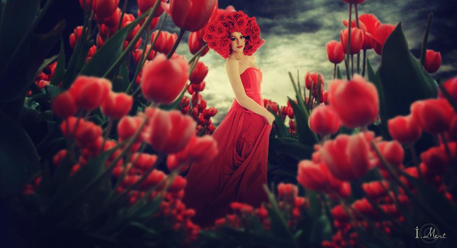tulip garden. by IMertTmyksl