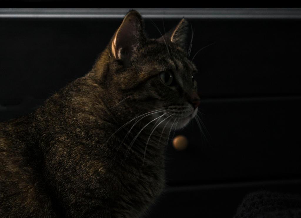 My Kitty in 2014 by TimeAngel-113224400