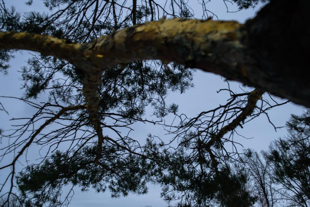 Night Tree by TimeAngel-113224400