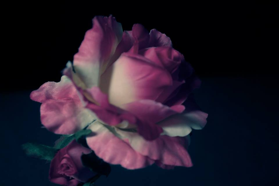 The Rose by TimeAngel-113224400