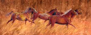 Horses by AmandaSpaid