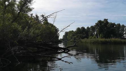 Video still: Nationaal Park De Biesbosch by boat by JvAOutdoor
