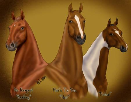 Three Saddlebreds