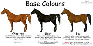 Equine Colours- Base Colours