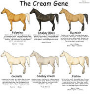 Equine Colours- The Cream Gene by Kholran