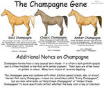 Equine Colors- Champagne