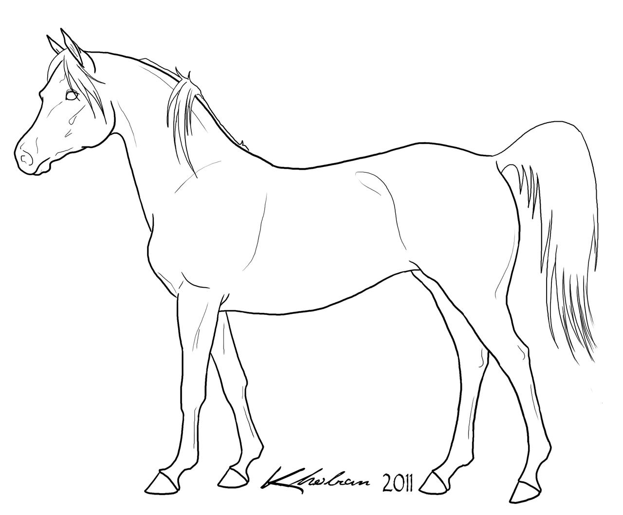 Easy Arabian Horse Drawings