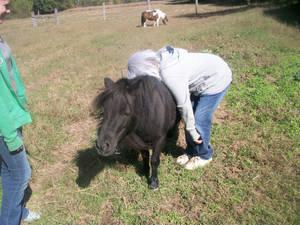 Pony Ride..