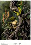 Yoda Swamp Dweller Coloured.