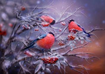 Bullfinches by Poglazovs
