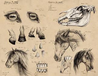 Kelpie Design Sheet by TheJasIllustrator