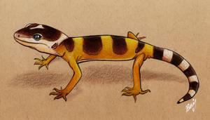 Baby leopard gecko study