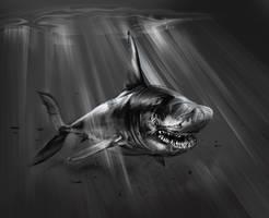 Shark by Seabasss
