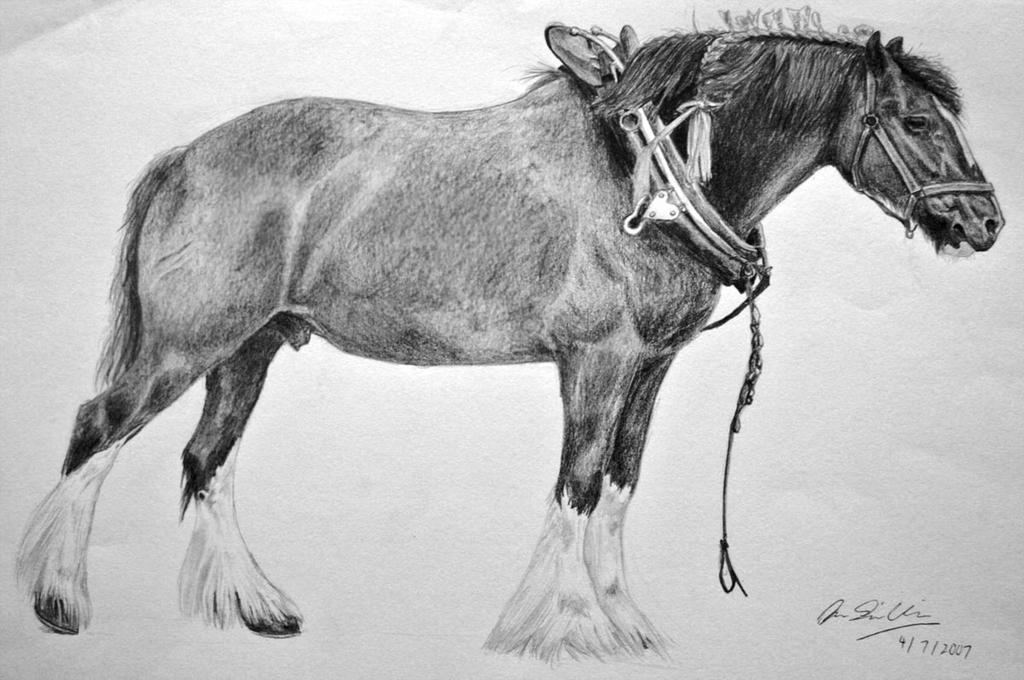 Shire horse black n white by shadowfrostthereaper on ...