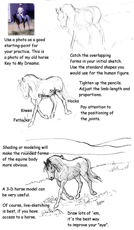 Horse Drawing Tutorial by Murasaki99 on DeviantArt