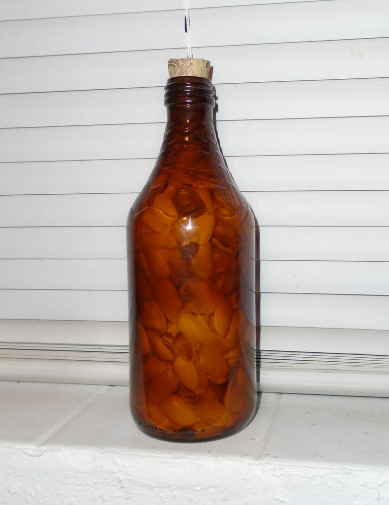 Seashell Filled Kumbocha LIVE Bottle I by lizking10152011