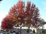 Autumn in California 3
