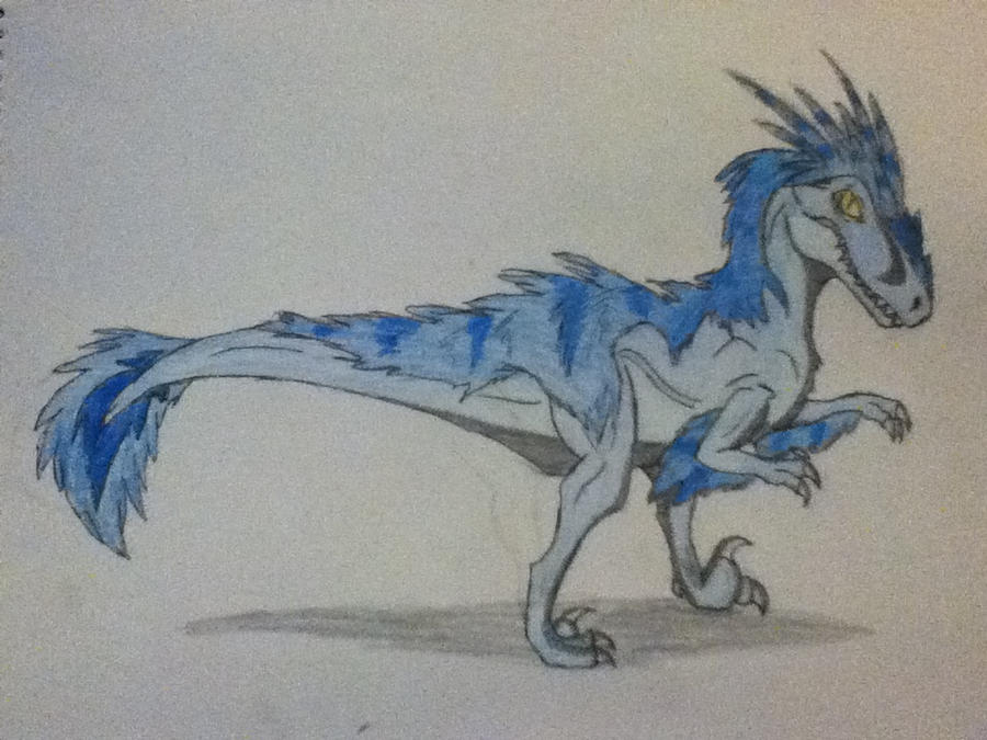 Velociraptor drawing by Koala-Sam