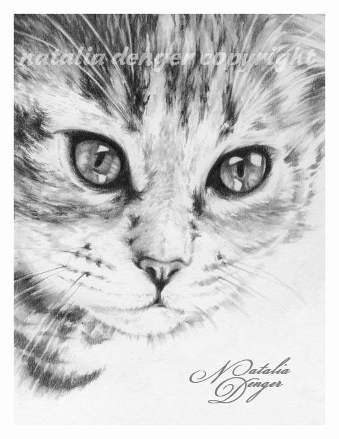 Kitten by Acacia13