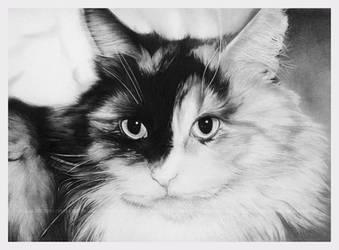 Kitty by Acacia13