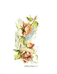 Roses by Acacia13
