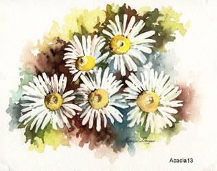 Daises by Acacia13