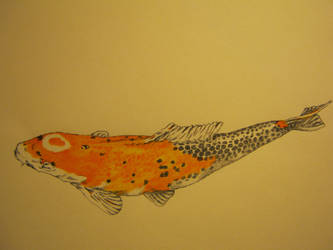 Koi  (experiment) Work in progress step 2 by Gabriel-s-Wings