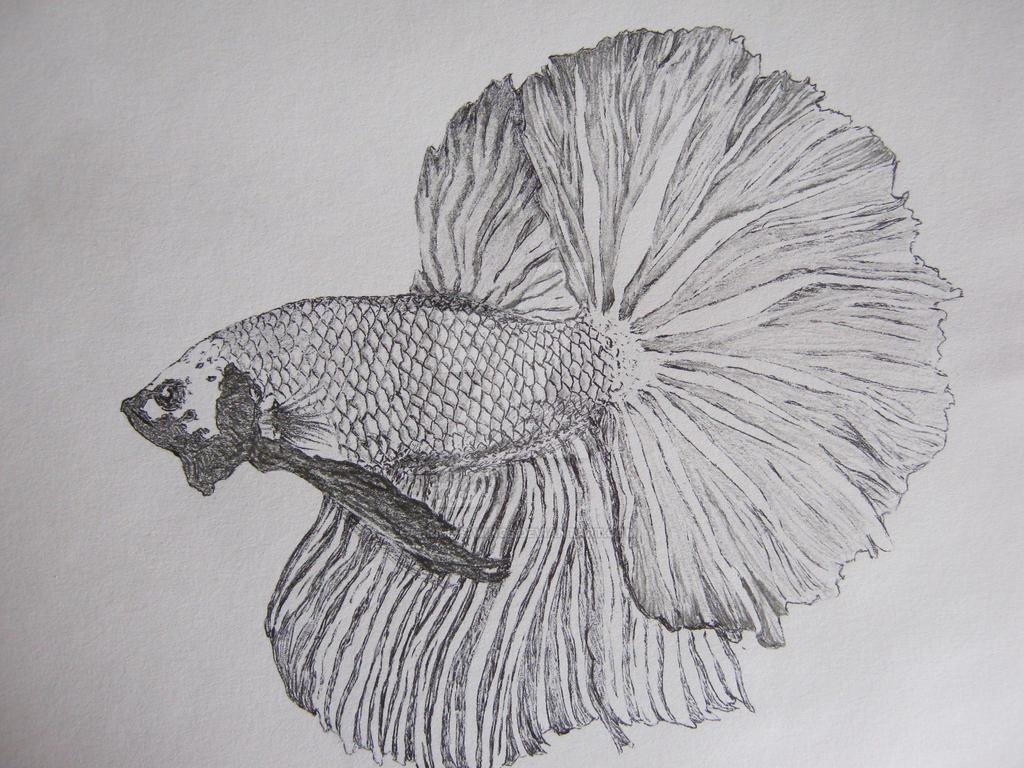 WIP Betta splendens filling by Gabriel-s-Wings on DeviantArt  Betta Fish Drawings