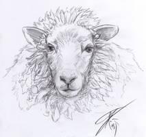 Sheep Sketch by Bruneburg
