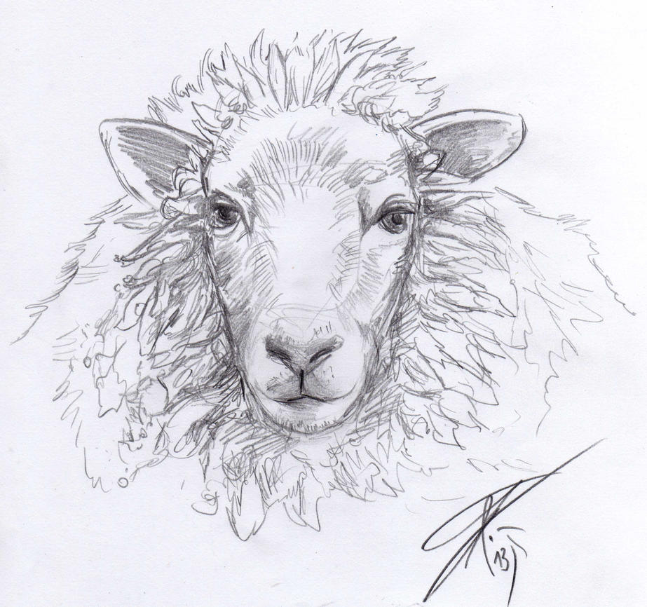 Line Drawing Of Sheep Face : Sheep sketch by bruneburg on deviantart