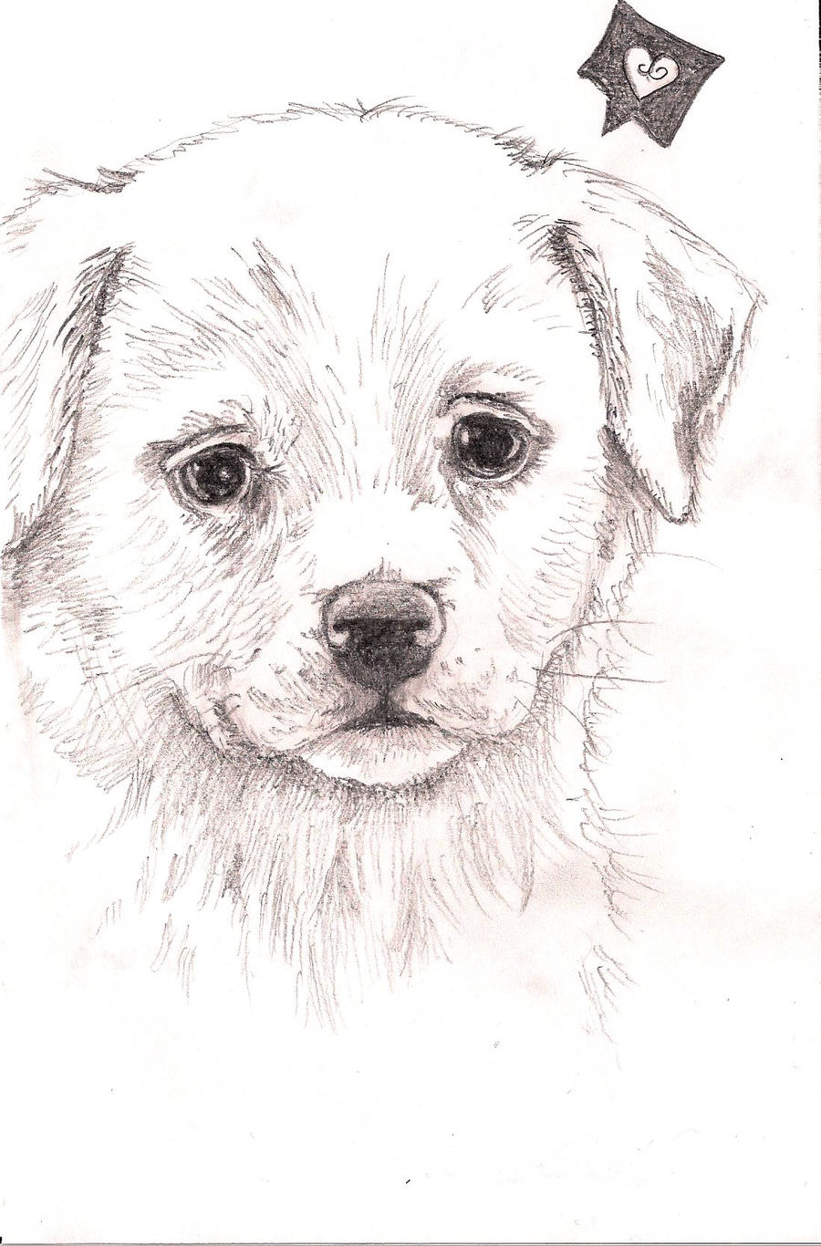 Puppy Drawing by Fentown