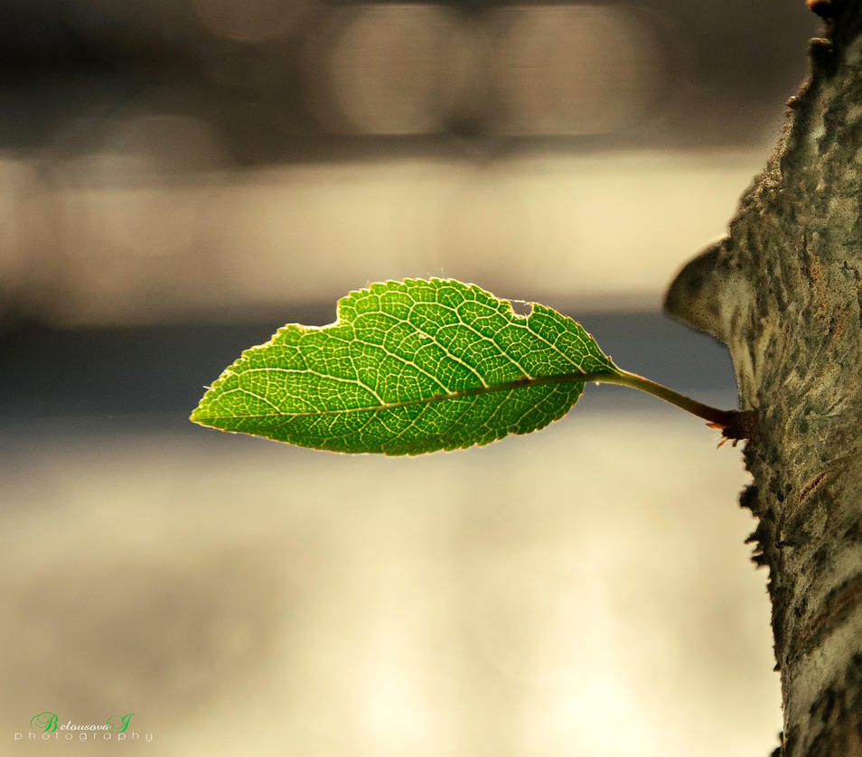 Leaf by aniribe